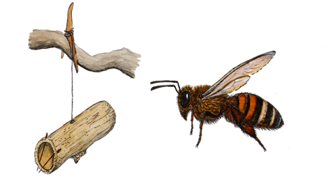 Bee Illustrated