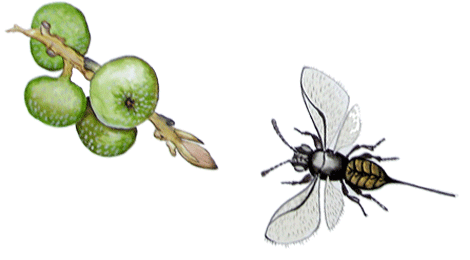 Wasp illustrated