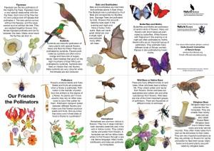 Brochure guide download